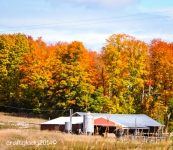 Fall on he Farm