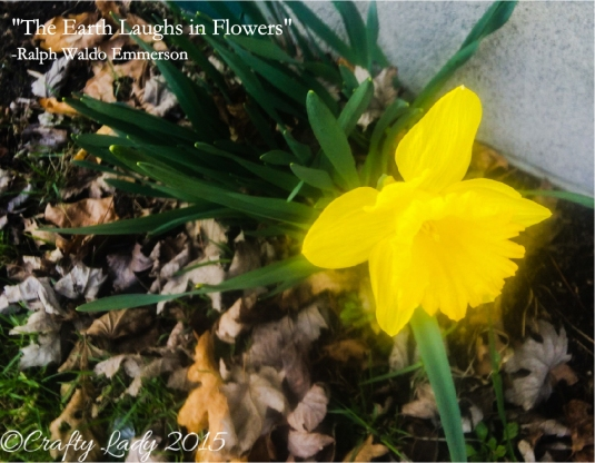 New Daffodil