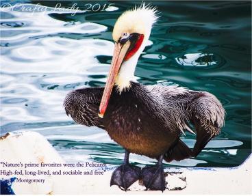 pelican_edited