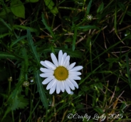 daisy11.use11jpg