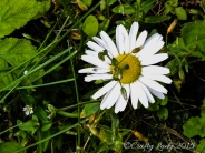 daisy7.use7jpg