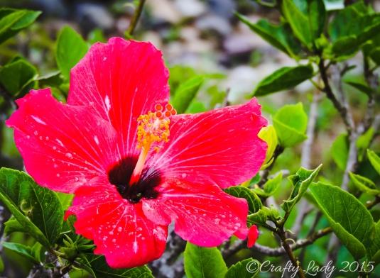 flower after rain 3