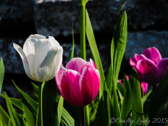 Flowers on Mackinaw Island