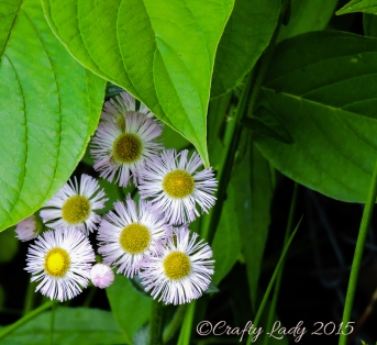 flowersuse