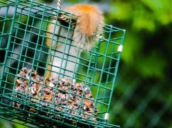 squirrel on block 5