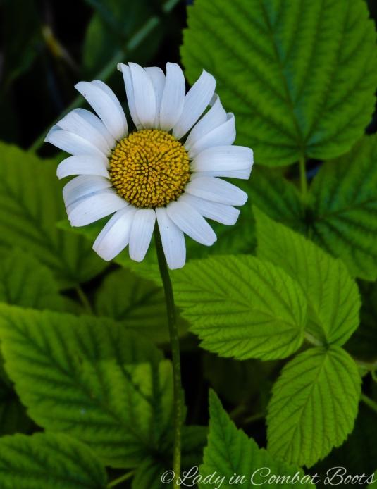backyard flower 12