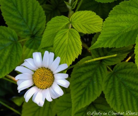 backyard flower6