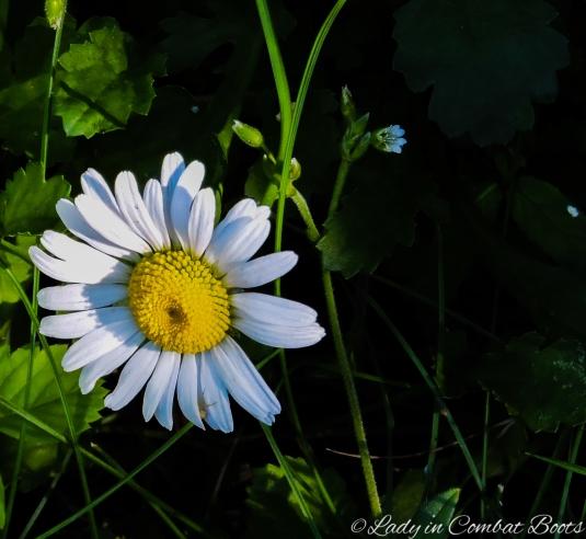 backyard flower7