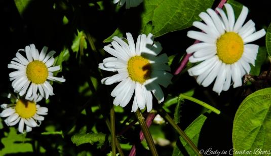 backyard flowers2
