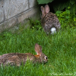 young rabbit 5