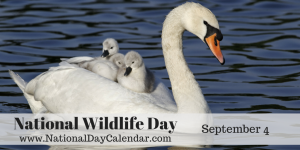 national-wildlife-day-september-4