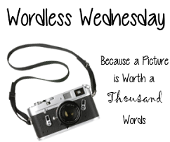 Wordless-Wednesday-250