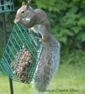 pic of week squirrel 4