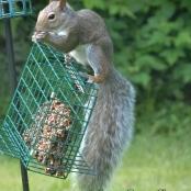 pic of week squirrel 4