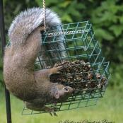 pic of week squirrel 5