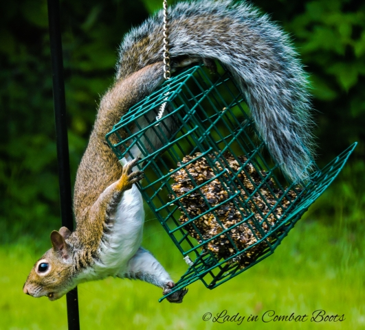 pic of week squirrel2