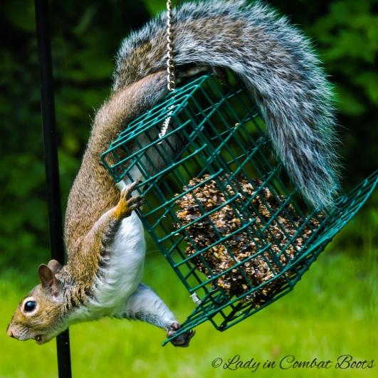 pic of week squirrel2