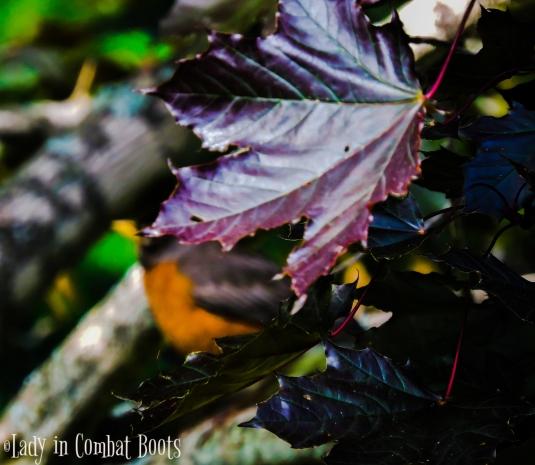 robin in trtee 4_edited