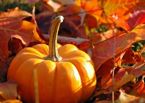 fall-leaves-and-pumpkins-1